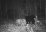 Otter Creek Outfitters Bear hunting